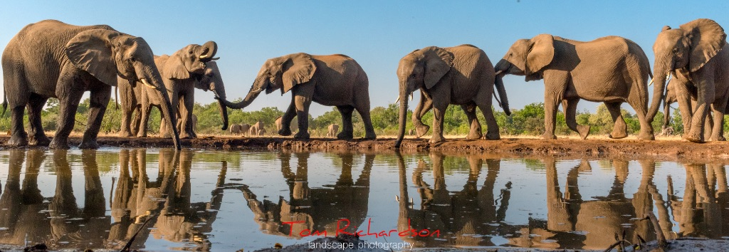 Elephants at the Matabole Hide-2