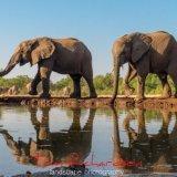Elephants at the Matabole Hide-2