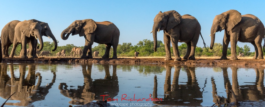 Elephants at the Matabole Hide-3