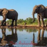 Elephants at the Matabole Hide-3