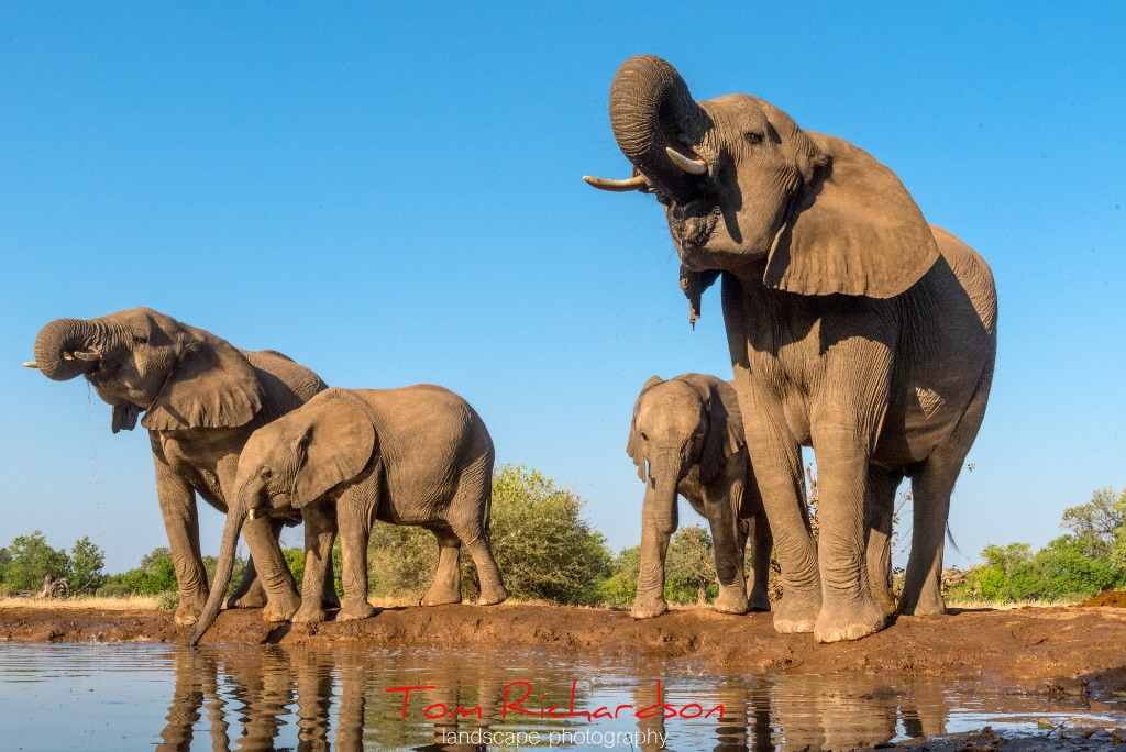 Elephants at the Matabole Hide