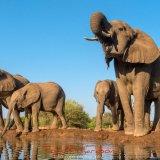 Elephants at the Matabole Hide