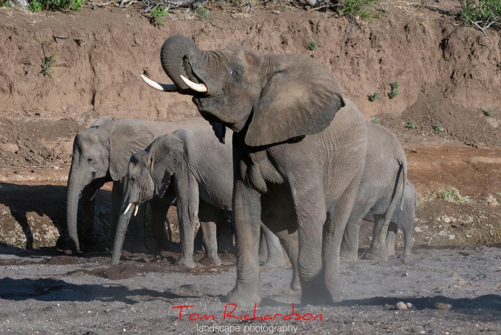 Elephants in The Majale River Bed-3