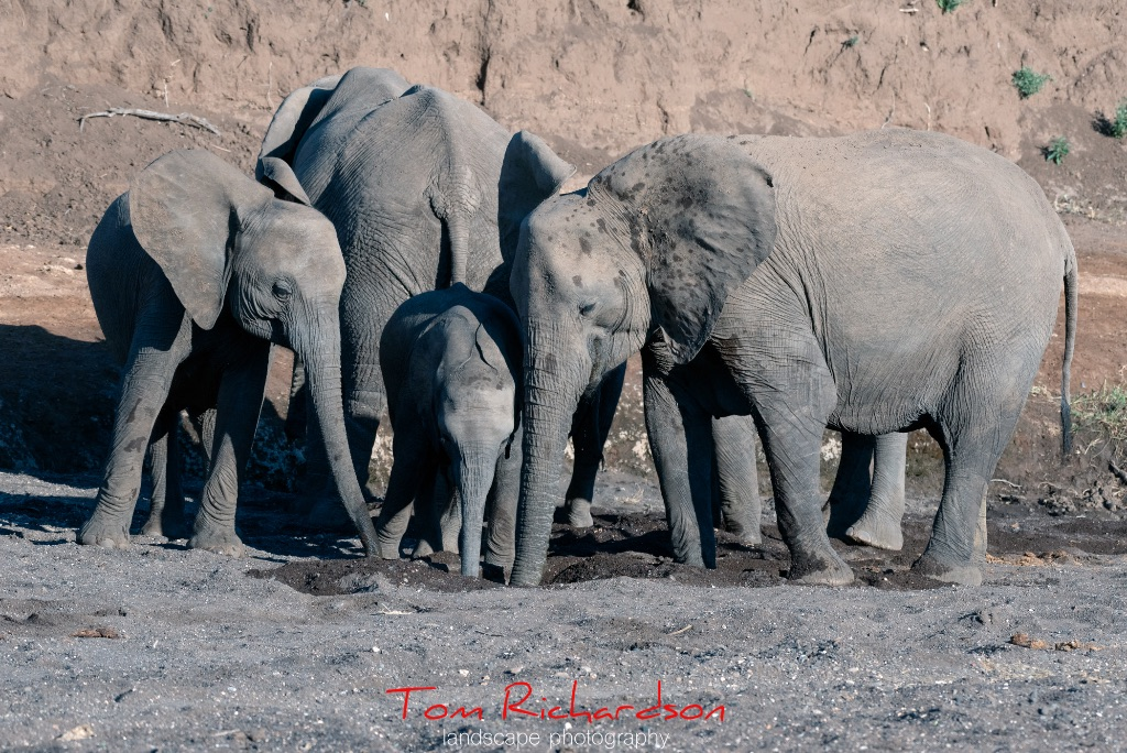 Elephants in The Majale River Bed-4