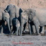 Elephants in The Majale River Bed-4