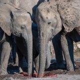 Elephants in The Majale River Bed-5