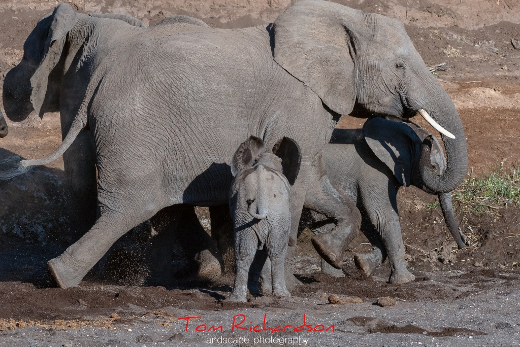 Elephants in The Majale River Bed-6