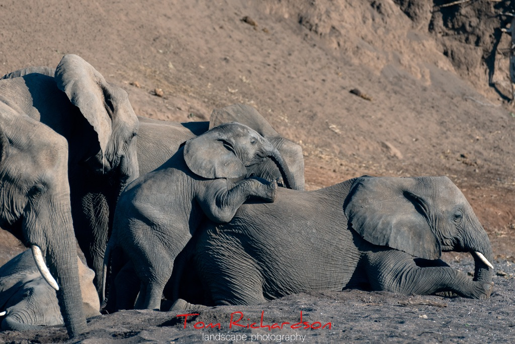 Elephants in The Majale River Bed-7