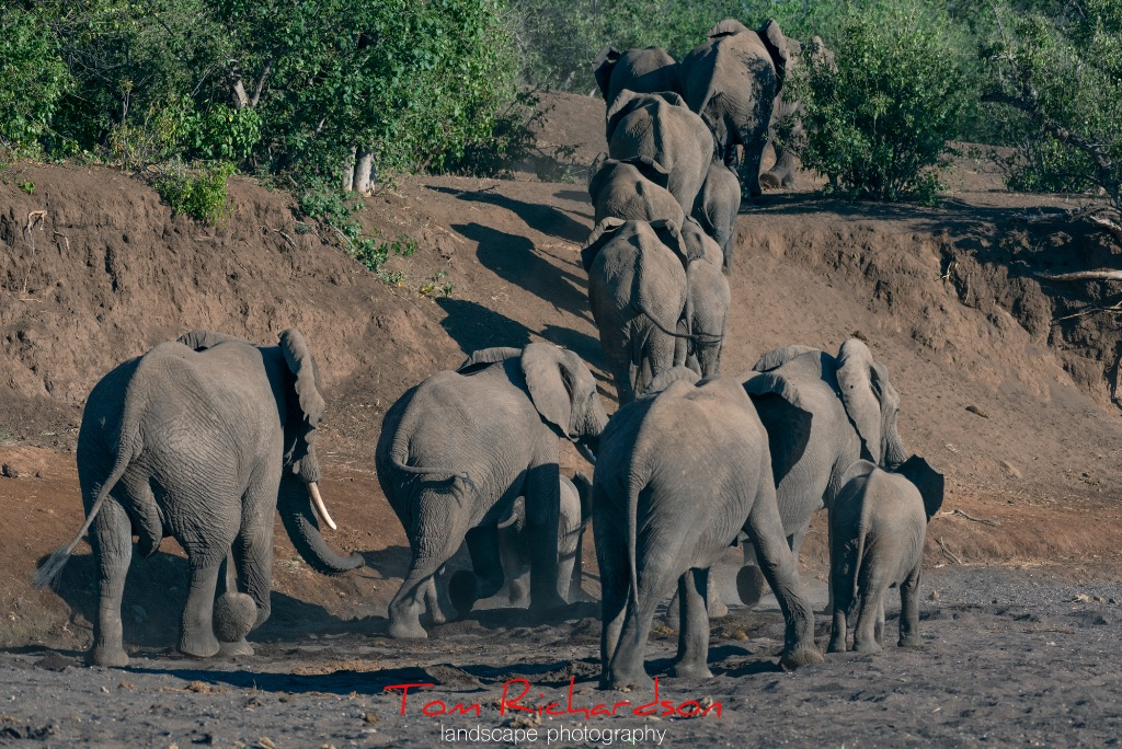 Elephants in The Majale River Bed-8