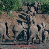 Elephants in The Majale River Bed-8