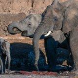 Elephants in The Majale River Bed