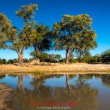 jackalberry trees near nehimba