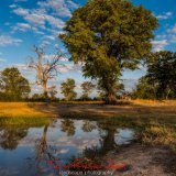 waterhole in hwange