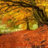autumn grizedale 2