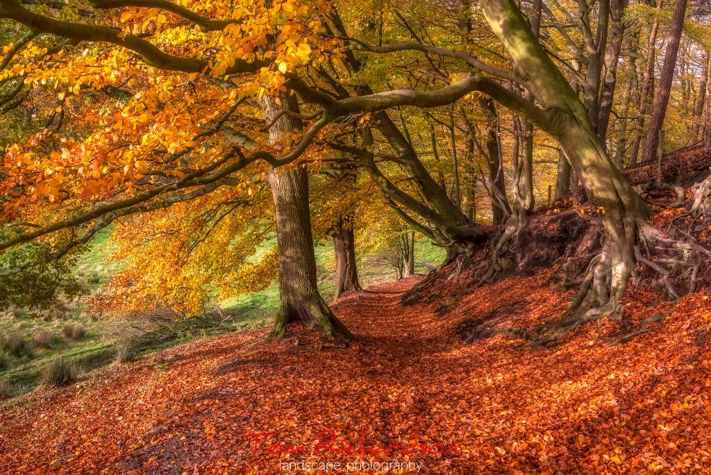 autumn grizedale 3