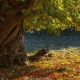 tree levens park
