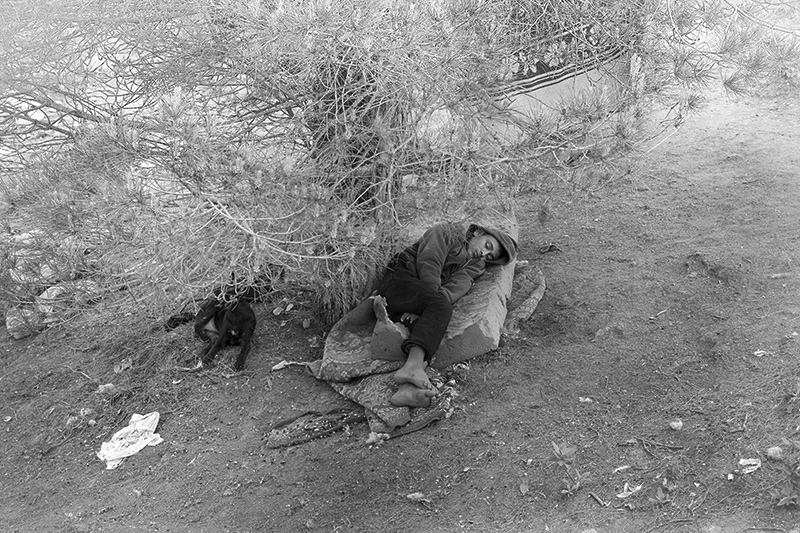 Young would-be immigrant sleeps under the tree, Morocco