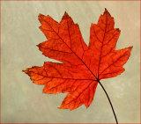 1st The Last Leaf by Joyce Bernard