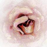 2nd Rose by Bob Zwolinsky