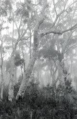 3rd Australian Bush by Tony Deller