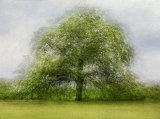 HM Spring Tree by Inna Karpova