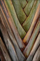 Hon Men Palm Tree Pattern by Joyce Bernard