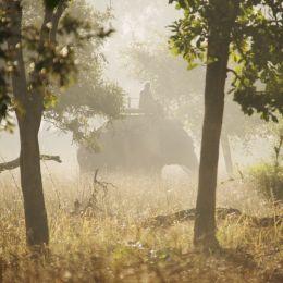 Elephant Mist