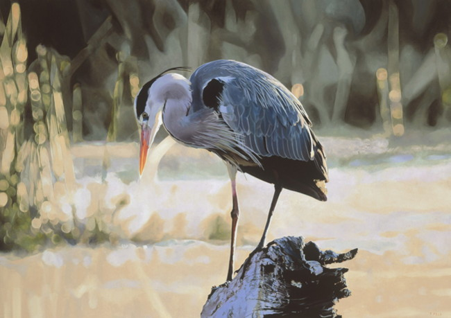 GREY HERON - AFRICAN MORNING