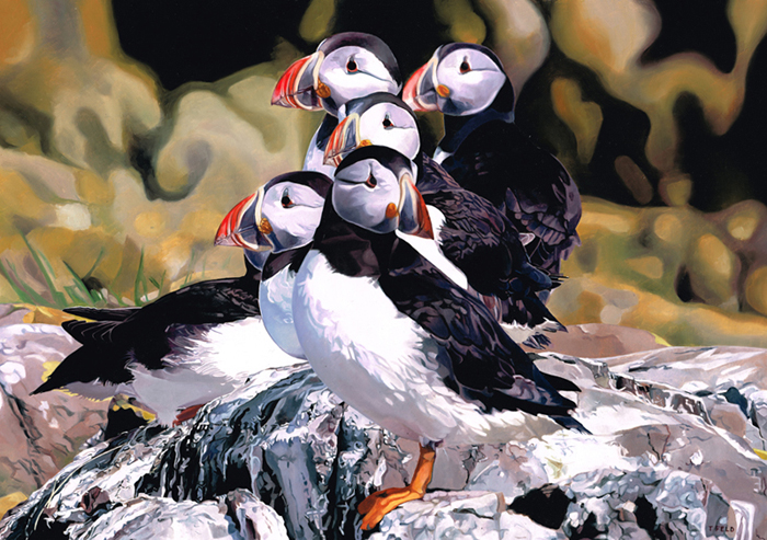 There is no collective noun for Puffins