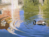 GOOSE AND REFLECTION - SCOTNEY CASTLE MOAT