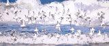 SURFING OCEAN BEACH