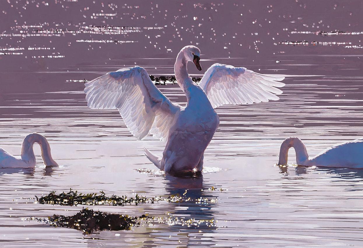 Swans at Ardoch