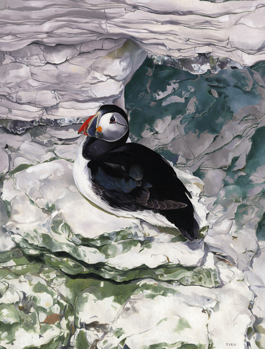 PUFFIN SITTING