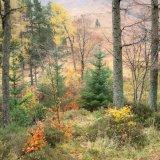 Autumn colour, Glen Coe