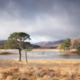 Autumn Pines, Loch Tulla