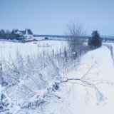 Bridget's Field, winter morning