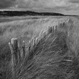 Fence, marram grass, sky