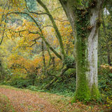 Path through Bossington wood, autumn