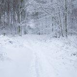Soakham Woods, Winter