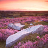 Stone and heather sunset