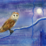 Owl by Moonlight