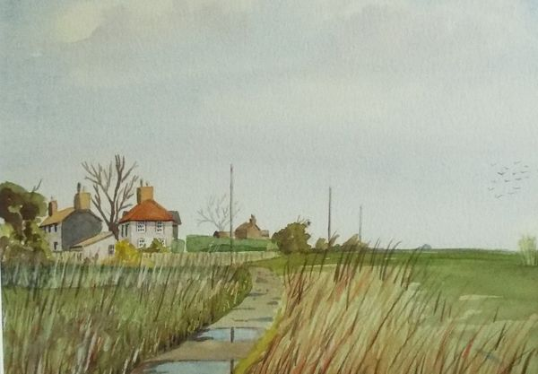 Cley Reeds