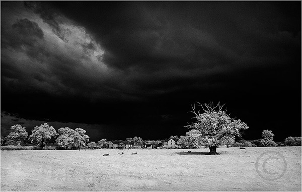 Oak Tree with Approaching Storm