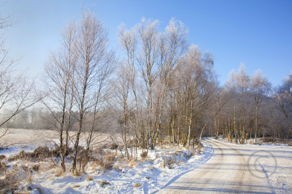 Cannock Chase in Snow 5