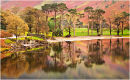 Buttermere Pine Reflections