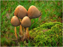 Fungi Group of Four