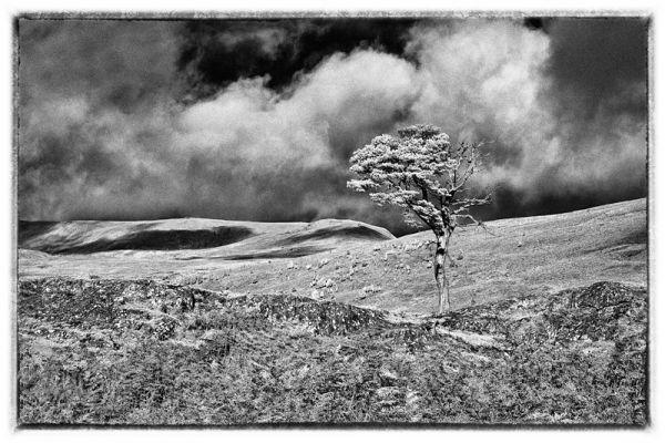 Lone Tree 3