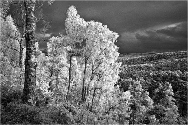 Glen Affric Treescape