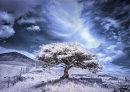 Lone Tree colour