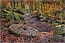 Padley Gorge in Autumn 2